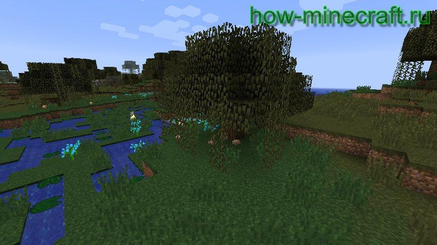 грибы на болоте